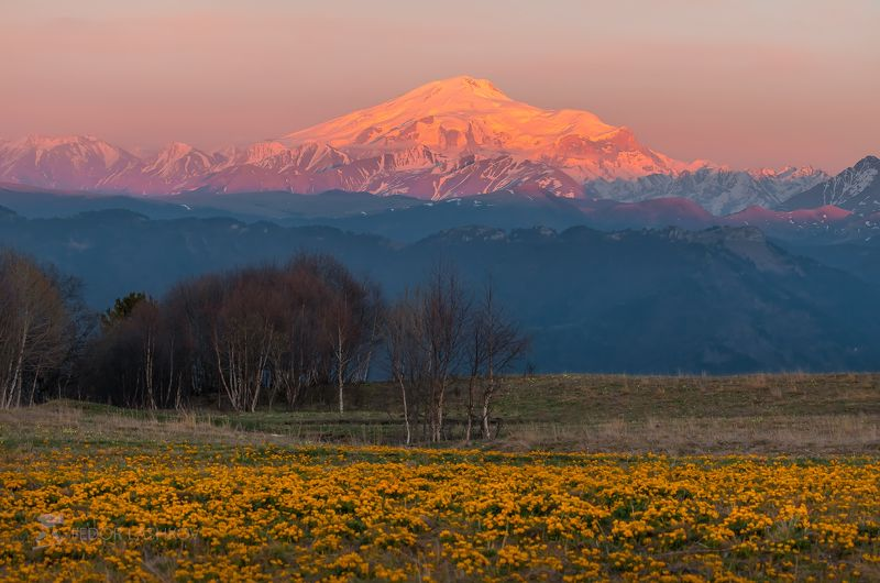 кавказ, теберда, эльбрус, кавказский хребет, весна, путешествие, горы, горное, туризм, цветение, альпийские луга, калужница многолепестковая, закат, сумерки, цветущее, жёлтый, на фоне гор, цветы, цветок, весеннее, гора, Цветение альпийских лугов на Кавказеphoto preview