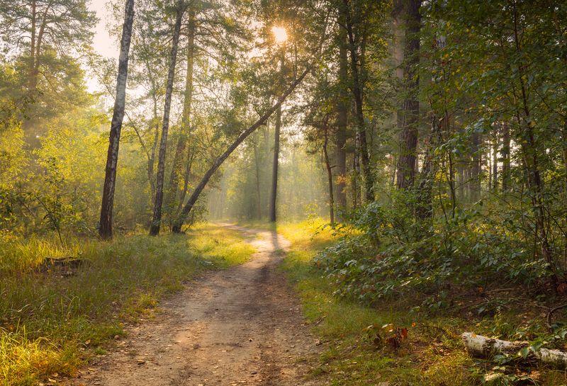 осень, сентябрь, утро, рассвет На встречу утреннему светуphoto preview