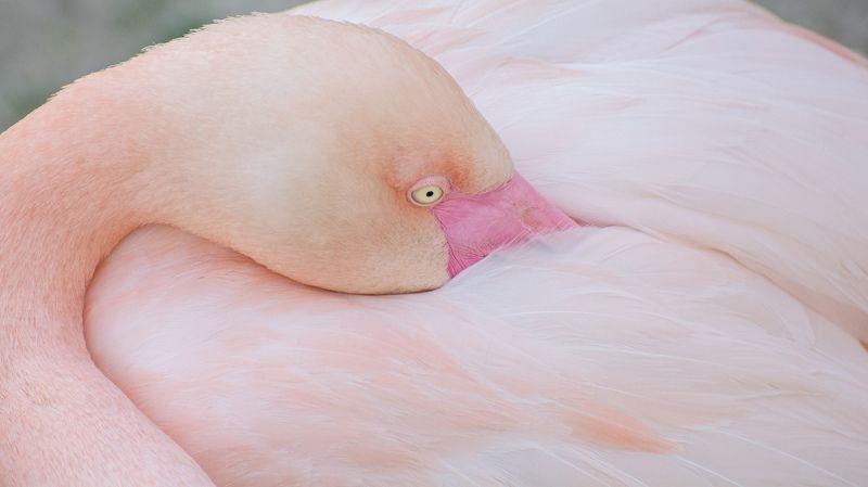 PRO Фламинго..photo preview