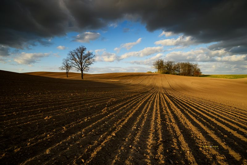 Field, landscape, clouds, sky, soil, trees Wild Tales.photo preview