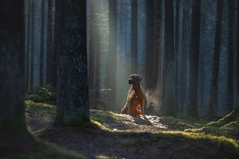 Утром в лесу...photo preview