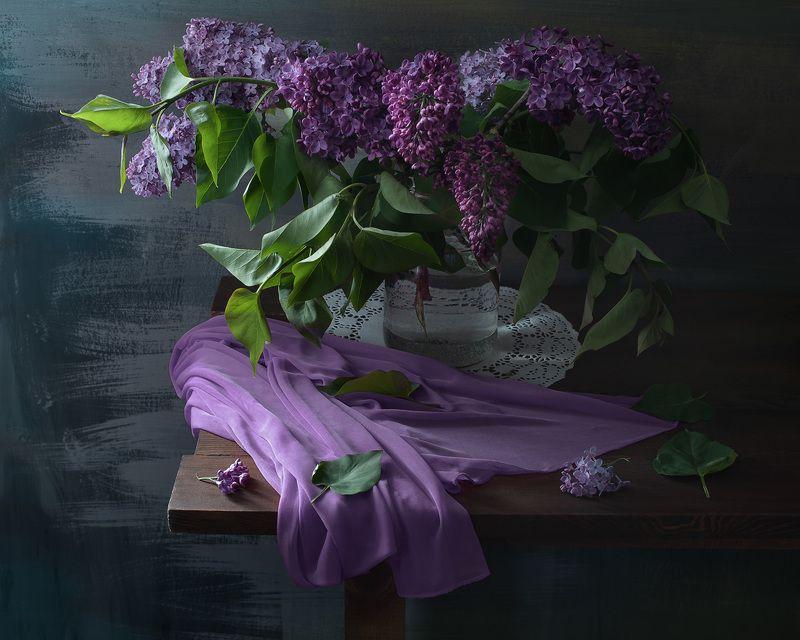 сирень Лиловый или розовый...photo preview