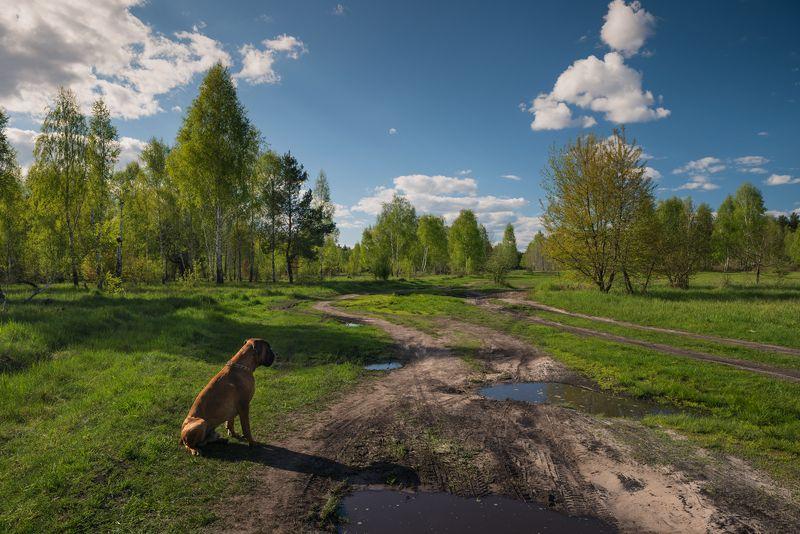 весна, май, вечер, луг, собака Кто созерцал величие природы, тот сам стремился к совешенствуphoto preview