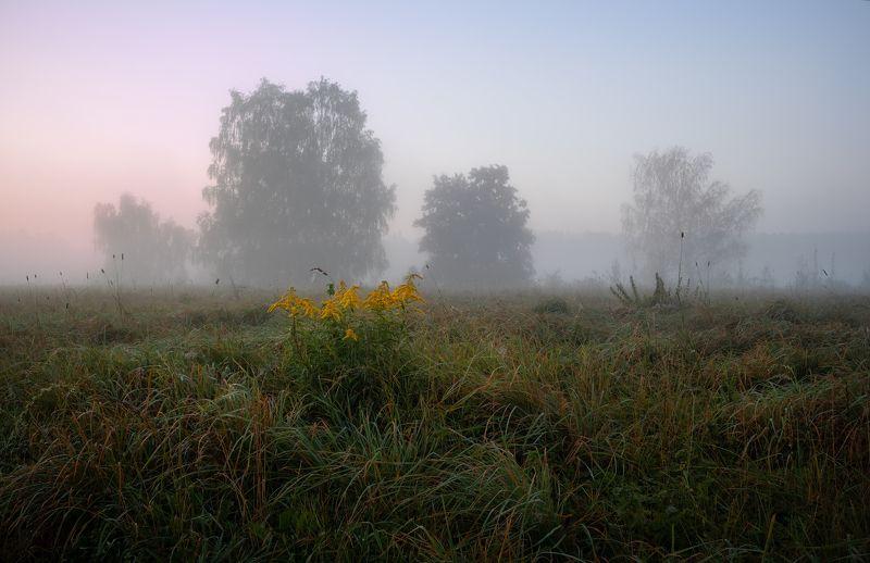 рассвет, туман, поле, деревья, Полевой цветокphoto preview
