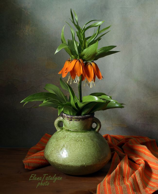 королевский рябчик, цветок Королевский рябчик фото превью