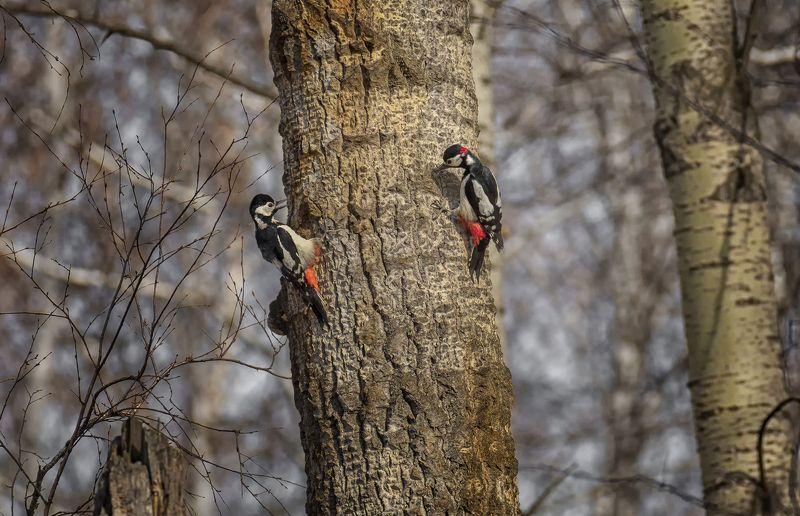 птица, дятел, весна, игры.. фото превью
