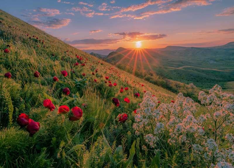 Цветущие склоны Киммерийских холмов.photo preview