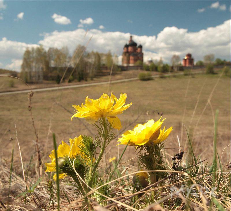 пейзаж весна май башкортостан Адонис цвететphoto preview