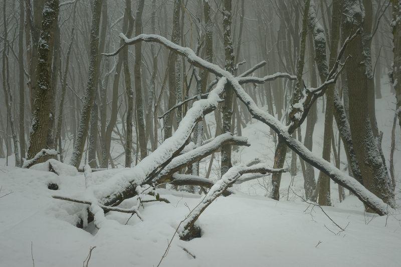 зима туман лес утро В зимнем лесуphoto preview