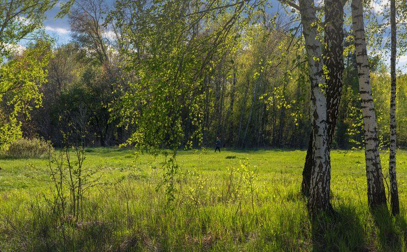 луг, весна, май Я шел полями и лугами, смиренно покорясь судьбеphoto preview