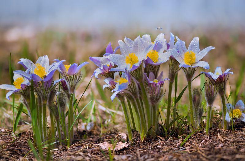 сон-трава весенние хороводыphoto preview