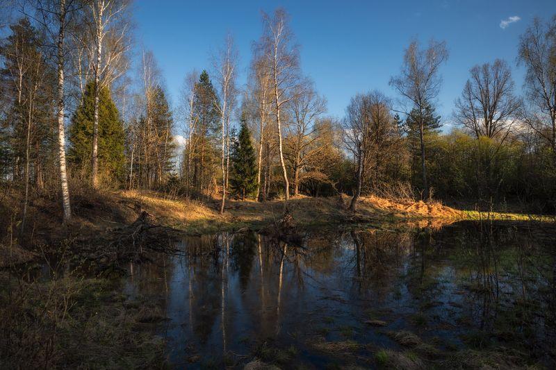 весна,лес,вечер,закат,свет,отражение весенний лесphoto preview