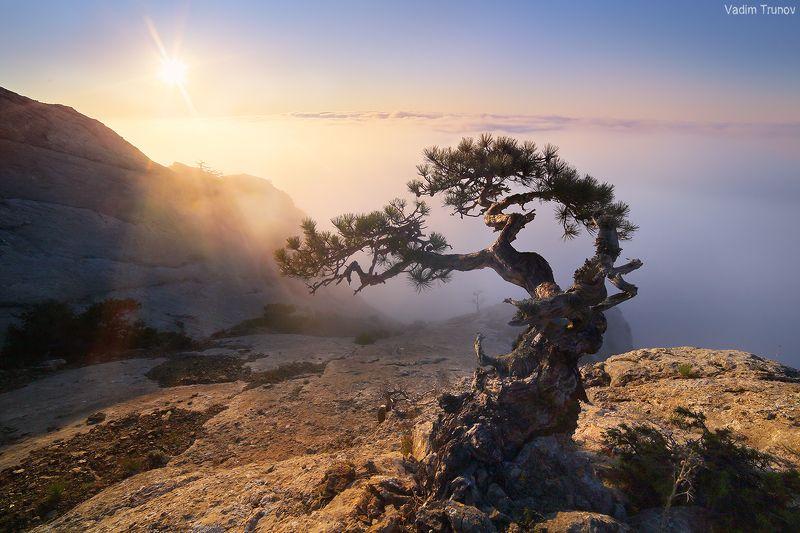 крым, сосна Выросшая на камне, закрученная ветрамиphoto preview