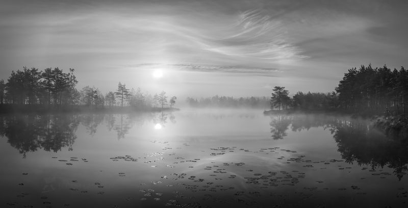 ленинградская область, рассвет, лето, сосны, озеро, отражение, деревья, берег, небо, облака, болото, водная гладь, Музыка тени и светаphoto preview