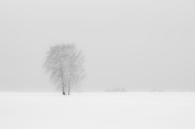 Ветер в поле фото превью