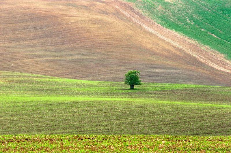 moravia, ,hills, ,spring, ,season, ,colors, ,tree, ,light, ,sunrise, ,fields, ,landscape, ,photography Moravian patchworkphoto preview