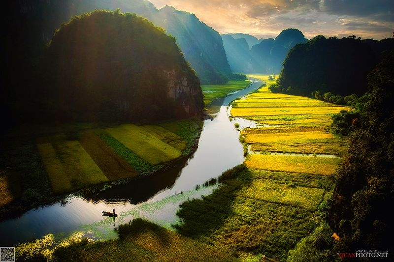 quanphoto, landscape, sunrise, dawn, morning, valley, fields, rice, harvest, golden, farmland, agriculture, river, fishing, mountains, vietnam Golden Rice Fieldsphoto preview