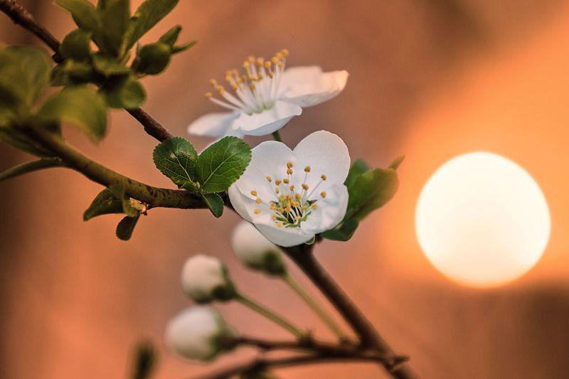 веснаphoto preview
