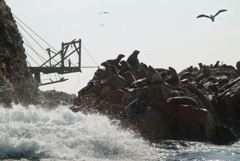 море, океан, берег, прибой, скала, тюлень, птица, волна, стихия, путешествие, приключение, шагнивнеизведанное Из цикла \