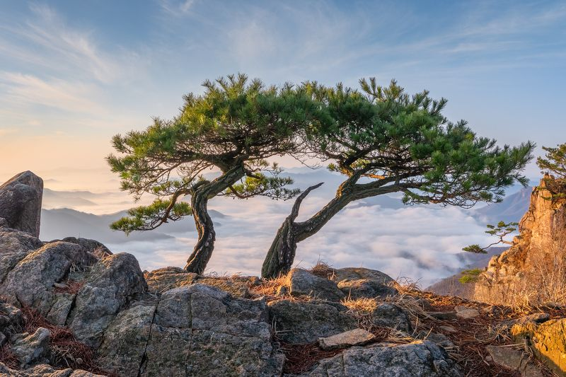 mountain, tree, nature, pine, clouds Brothers\' morningphoto preview