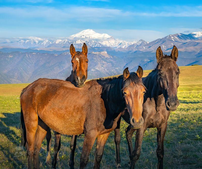 кавказ, теберда, эльбрус, кавказский хребет, весна, путешествие, горы, горное, пастбище, лошадь, лошади, кони, скот, На фоне горphoto preview