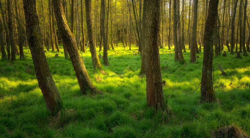 spring, nature, landscape, light, forest Springphoto preview