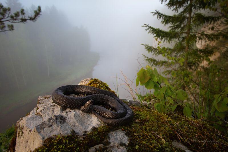 урал, змея, гадюка, рептилия, пейзаж Уральские сказы. Великий Змей.photo preview