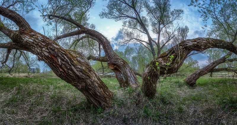 Старые деревьяphoto preview