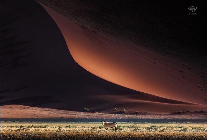 Намибия, дюны, пейзаж Орикс - символ Намибии на фоне песчаных дюн...photo preview