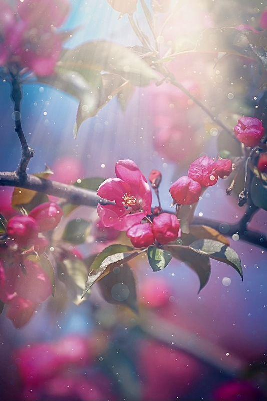 Apple Treephoto preview