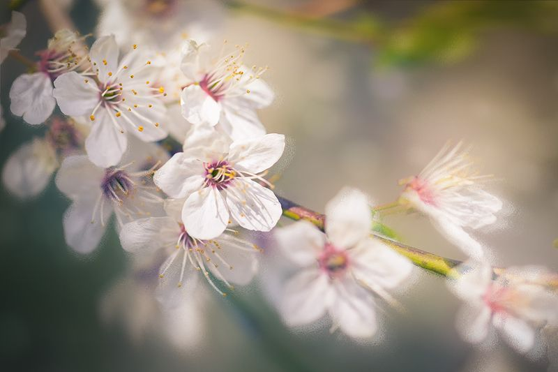 весна, май, макро, цветы, цветение Майphoto preview