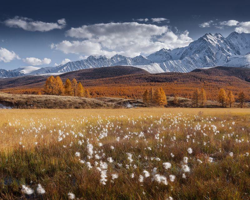 алтай, ештыкель, осень Алтайская пушицаphoto preview