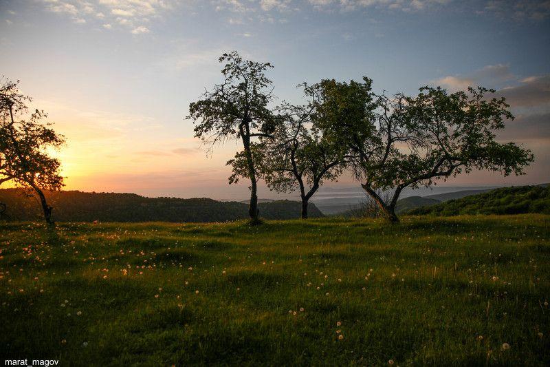рассвет,горы,вершины,пейзаж,небо,деревья,дагестан,природа Утро в яблоневом саду..photo preview