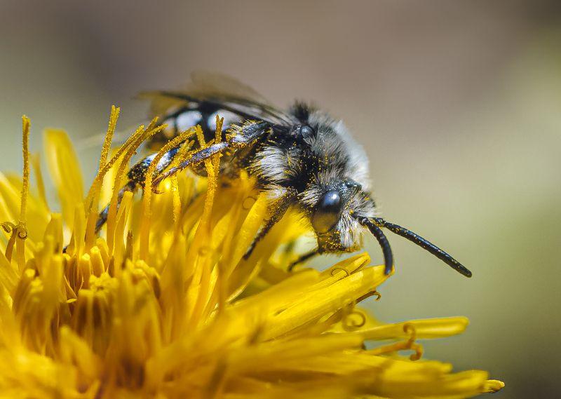 Если б мишки были пчелами...photo preview