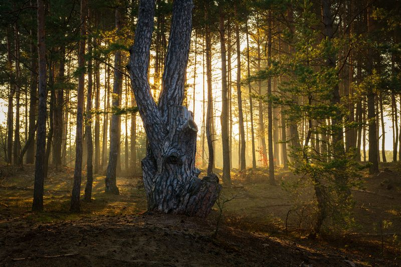 morning, nature, landscape, forest, colors, Morning lightphoto preview