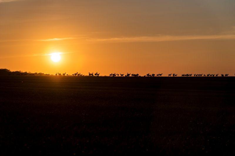 олени, закат Олениphoto preview