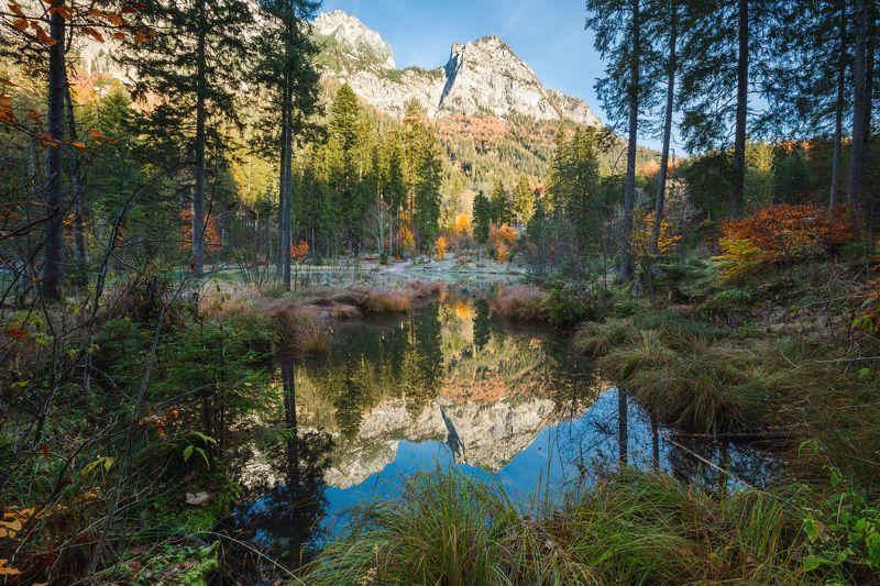 германия, бавария, озеро, отражение, горы, осень, лес Осенний лес.photo preview