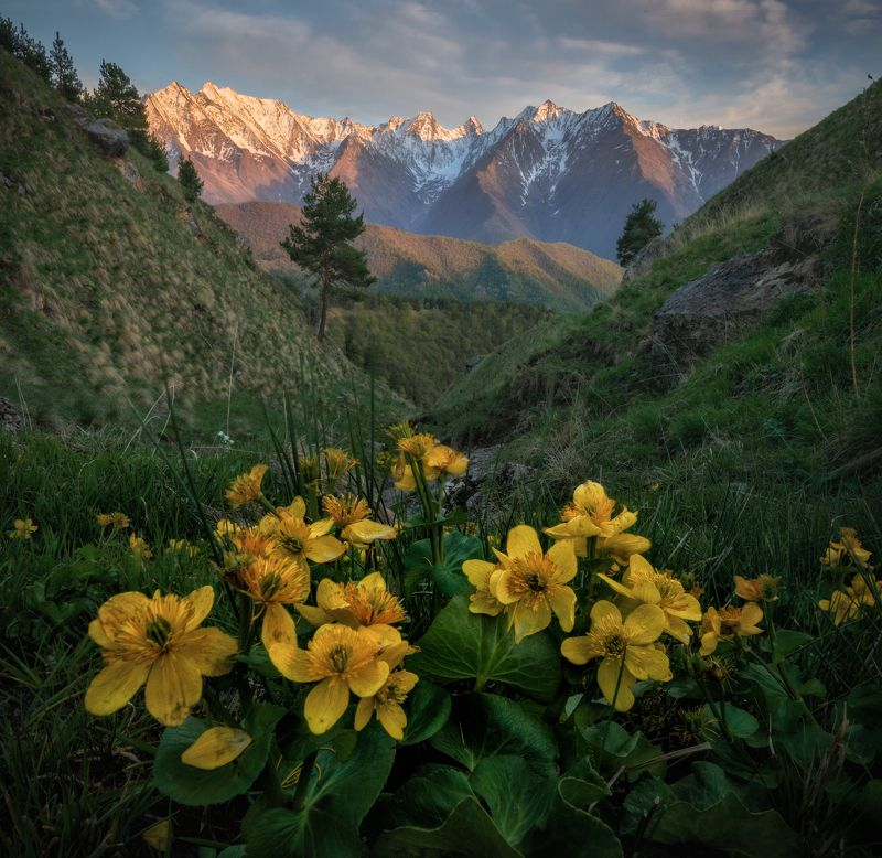 кавказ Ингушетия.photo preview