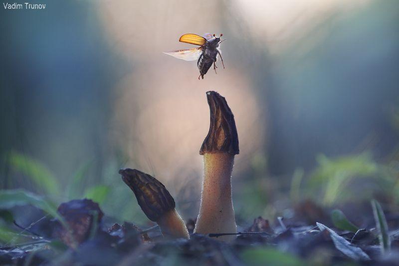 майский, жук Взлетаюphoto preview