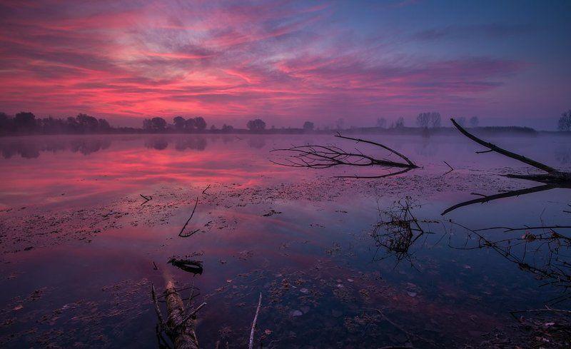 Purple Morningphoto preview