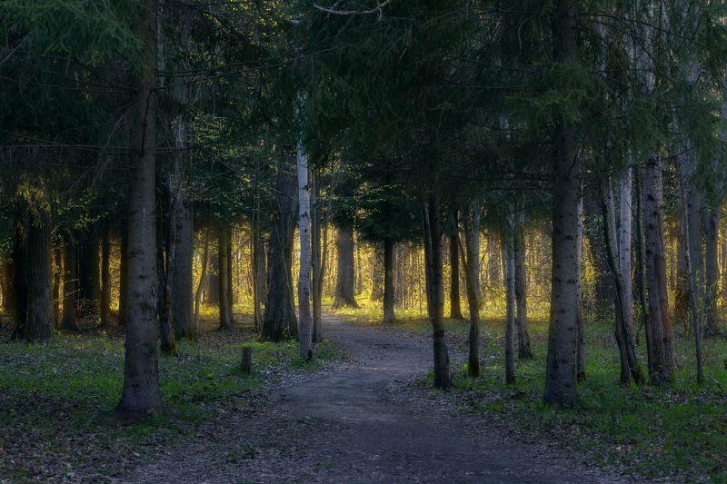 природа, лес, закат, деревья, Московская область, пейзаж ***photo preview