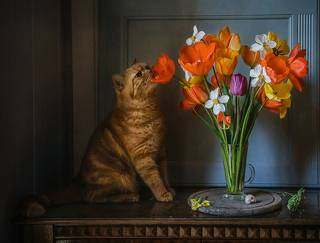 Любитель тюльпанов