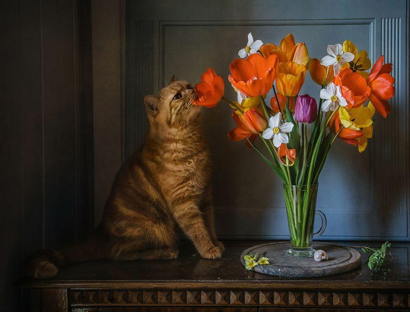 натюрморт, цветы, тюльпаны, кот Любитель тюльпановphoto preview