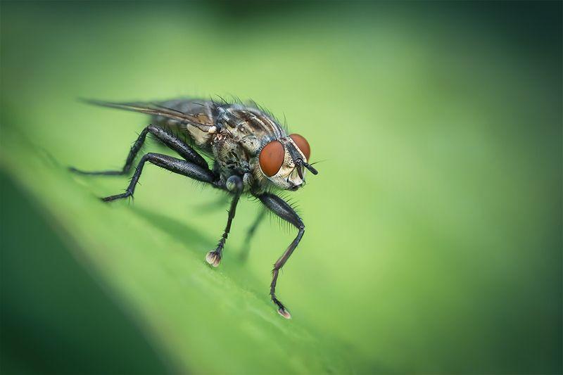 макро, муха, macro, fly По зеленым долинамphoto preview