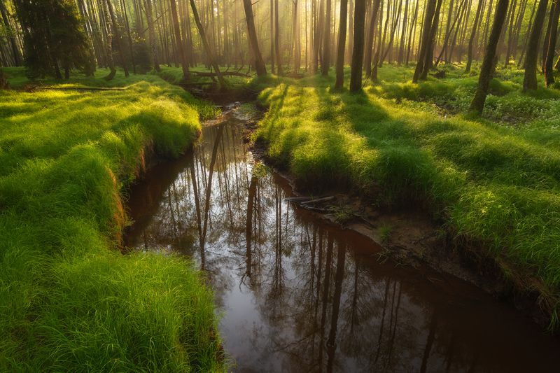 nature, landscape, colors, sunrise, tree Springphoto preview