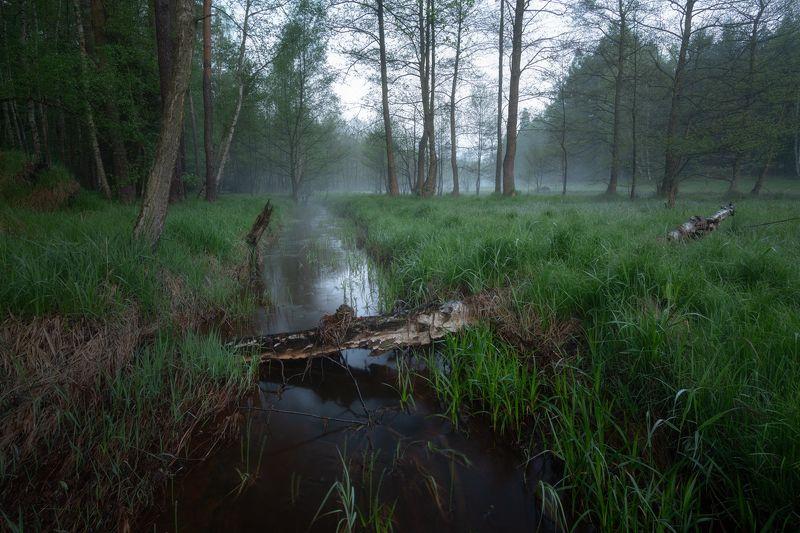 nature, landscape, foggy, sunrise, tree Foggy morningphoto preview