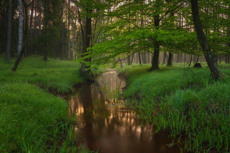 nature, landscape, colors, sunrise, tree photo preview