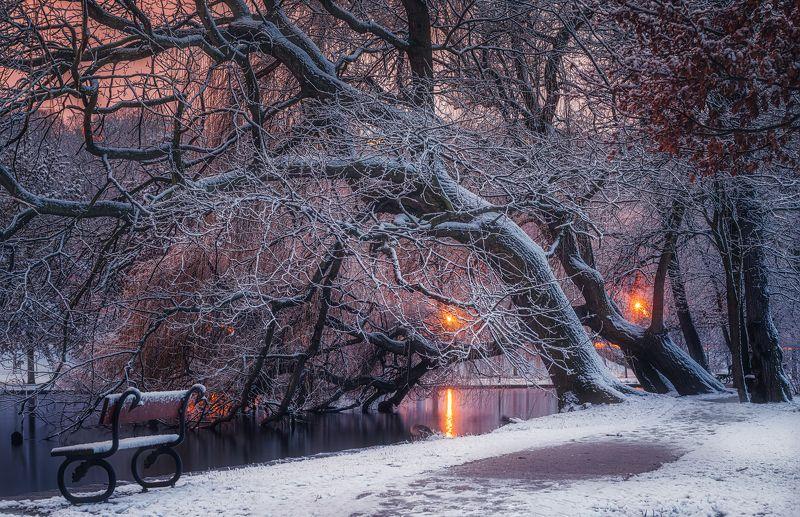 Нет людей  на улице  фотография  зима  снег  дерево  природа  Вода Природа  Холодная температура  день  Пейзаж   небо  спокойствие  Красота в природе  лес  Спокойная сцена  мороз  Зимние вечера в Праге.photo preview