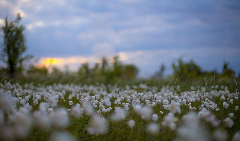 пейзаж, рассвет, весна, май, степь, ветреница Ветреничная полянаphoto preview