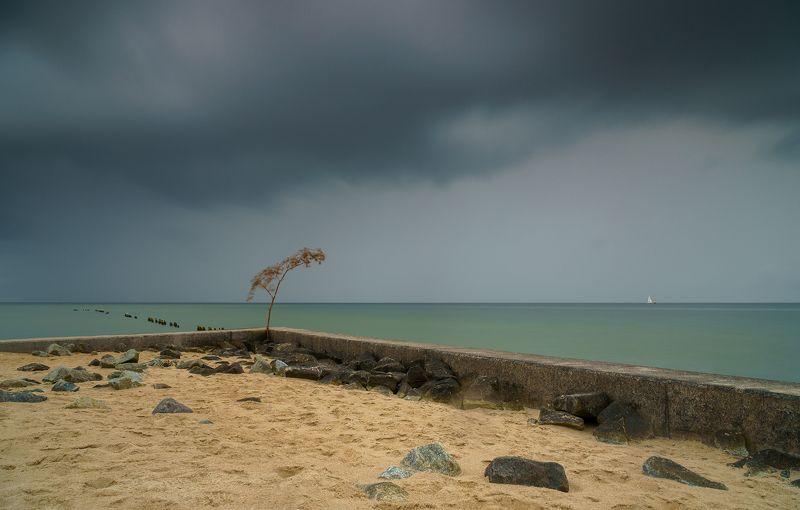 poland, hel, sea, baltic, cloud, rain, last, tree Helphoto preview